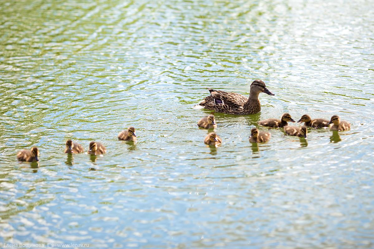 семейная прогулка в сартаково