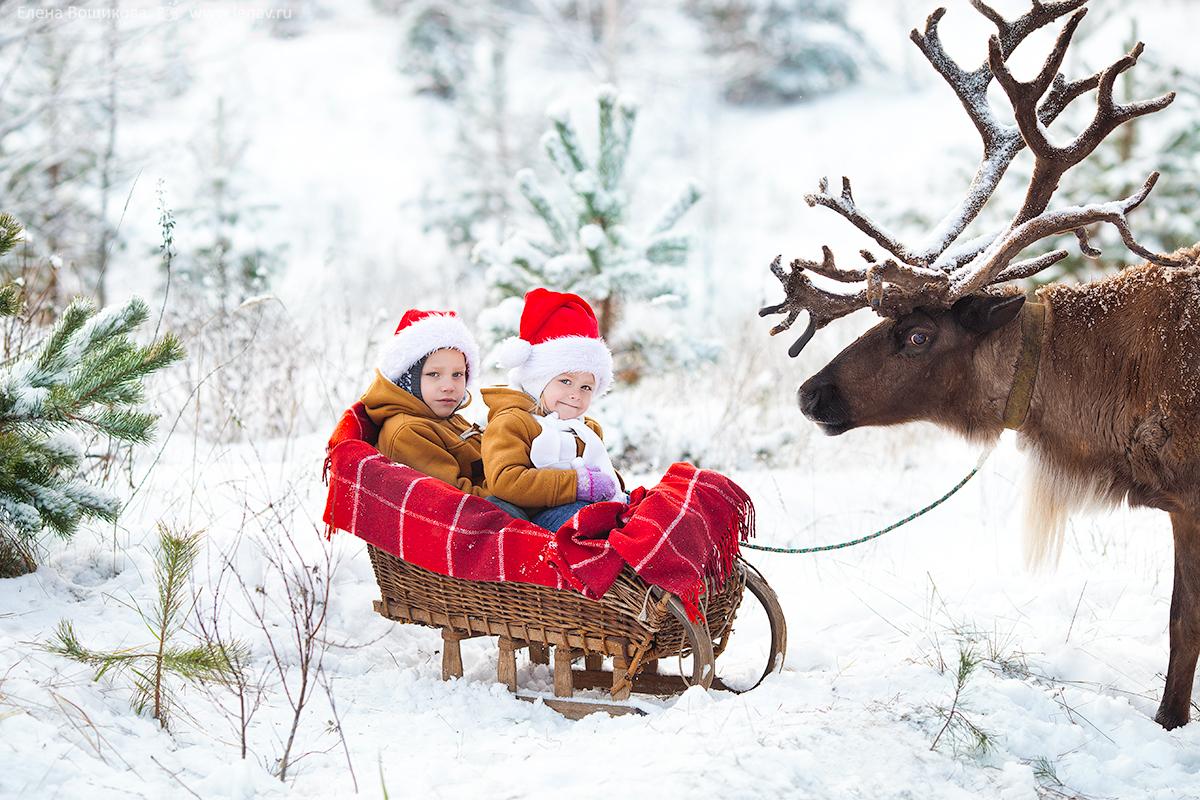 фотосессия с северным оленем зимняя нижний новгород
