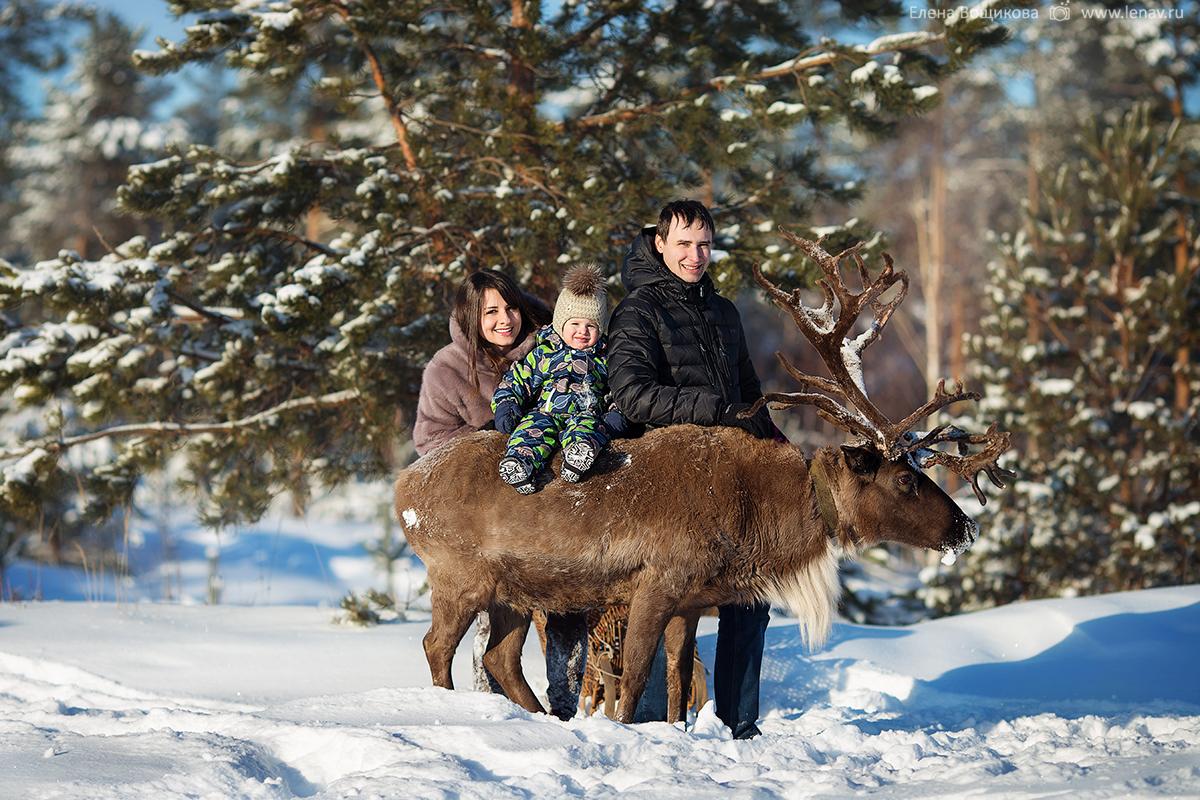 фотосессия с северным оленем в нижнем новгороде