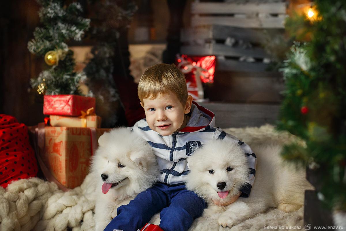 новогодняя фотосессия в студии с щенками