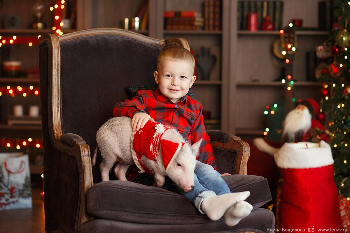 фотопроекты с животным для детей в нижнем новгороде